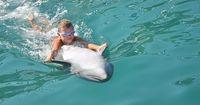 Das Schwimmen mit Delfinen soll verboten werden