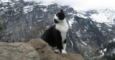 Deswegen ist diese Katze jetzt weltberühmt!