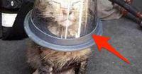 Er stülpt der Katze einen Becher über den Kopf und ALLE schauen dabei zu...