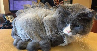 Diese Katzen mögen ihre Sommerfrisuren gar nicht