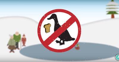 Deswegen soll man Vögel NICHT mit Brot füttern
