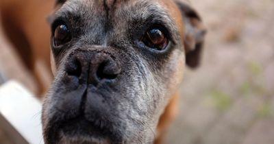 Hunde-Probleme, die Menschen einfach nicht verstehen