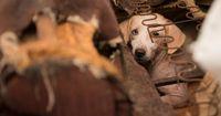 70 Hunde wurden aus grausamen Bedingungen gerettet