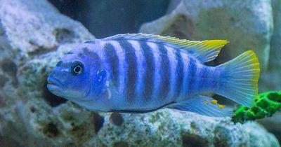 6 Fakten die zeigen, dass Fische mehr können als wir dachten