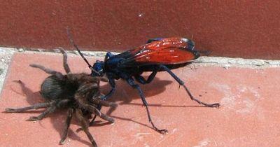 So fühlen sich die schmerzhaftesten Insekten der Welt an