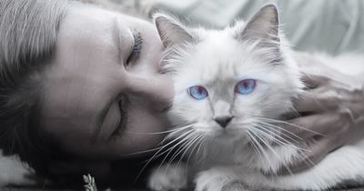 Die 10 besten Ausreden für Katzenbesitzer