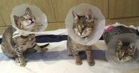Keiner wollte diese 3 blinden Katzen haben...