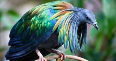 Sie töten diese Vögel, um aus ihnen Juwelen zu machen