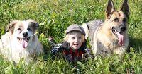 Das sind die kinderfreundlichsten Hunderassen