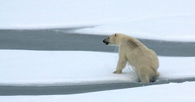 In Sibirien bangen Forscher um ihr Leben, weil sie von diesen Raubtieren umzingelt werden