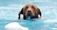 Ein Schwimmbad exklusiv für Hunde