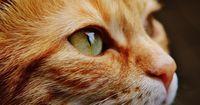 Perfider Mordversuch an einer Katze