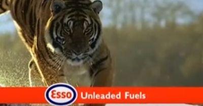 Dieser Tiger wurde steinalt...