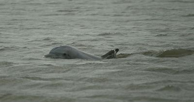 Diesen Delfin hat es in die Kieler Förde verschlagen