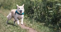 Das musst Du beachten, wenn Du mit Deinem Hund joggen gehst