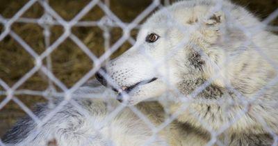 Horror-Zoo wird wegen Protesten geschlossen