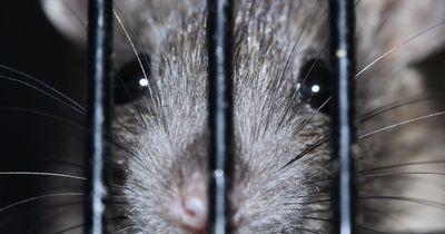 Niederlande will Tierversuche nun endgültig unterbinden