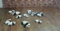 Diese Panda Baby-Fotos aus China sind alles andere als süß...