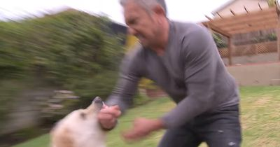 Berühmter Hundeflüsterer wird vor laufender Kamera gebissen