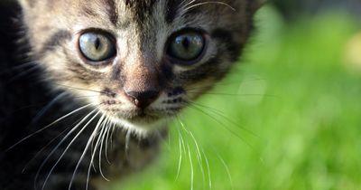 Kätzchen sollte auf grauenvolle Weise sterben