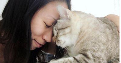 Kuscheln mit Katzen kann tödlich enden