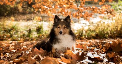 Das quält Hunde im Herbst besonders