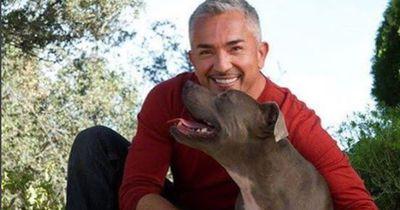 Aversives Training beim Hund: Ja oder nein zum Hundeflüsterer?