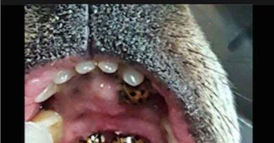 Im Maul diesen Hundes befinden sich viele kleine Krabbeltiere