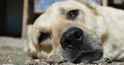 Dramatische Rettung: Hund stürzt in eiskalten Fluss