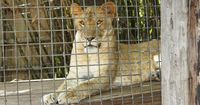 Diese Wildtiere wurden unter schrecklichen Umständen gehalten