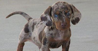 Die seltensten und schönsten Hunde-Mischlinge