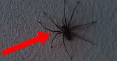 Schock-Video: Spinneninvasion im Wohnzimmer