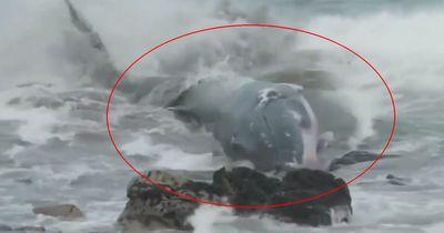 Diese Fischer retten gestrandeten Wal