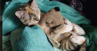 Diese vier Wochen alte Katze hat riesige Froschaugen