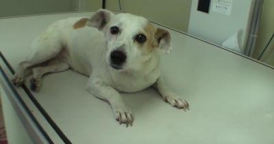 Der Tierarzt ist geschockt, als dieser streunende Hund bei ihm landet