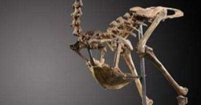 Einzigartiges Skelett eines ausgestorbenen Tieres versteigert