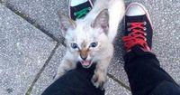 Als er im Park auf ein Kätzchen trifft, lässt es ihn nicht mehr weggehen