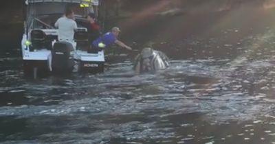 Begegnung mit einem Buckelwal: Plötzlich stupste er das Boot an