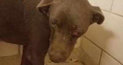 Hundehasser tut ihm grundlos etwas Fürchterliches an