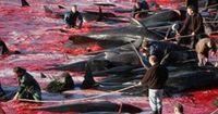 Dieses Land ist die größte Walfangnation überhaupt
