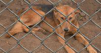 Hündin im Tierheim rastet völlig aus, als sie ihre alte Familie wieder sieht