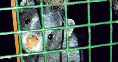 Das ist die Zukunft von Japans Pelz-Farmen