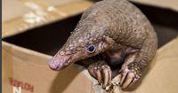 Studenten fanden ein Tier, das am Schwarzmarkt viel Geld einbringen würde