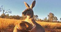 Mit einer Geste wurde dieses Känguru zum Internet-Star!