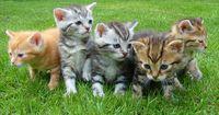 In einer winzigen Wohnung wurden 48 Katzen gefunden