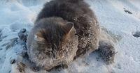 Mit allen vier Pfoten war die Katze am Boden festgefroren