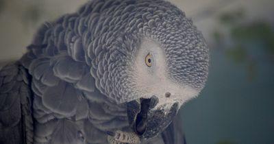 In mysteriösem Mordprozess muss ein Papagei vor Gericht
