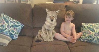 Sie wollten einen Hund als Haustier ...