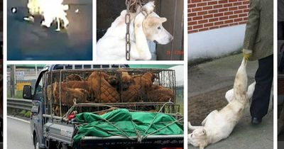 Südkoreas größter Hundefleisch-Markt überhaupt schließt endlich