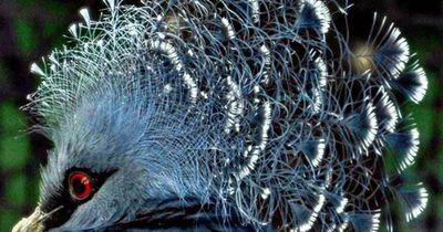 Dies sind die seltensten Tierarten der Welt